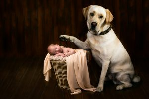 Babyfotograf rhein erft kreis